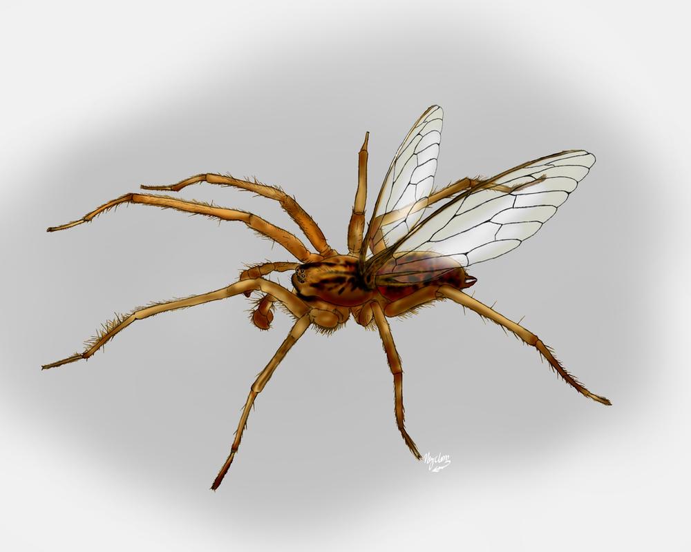 Flying tarantula
