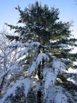 Winter Giant