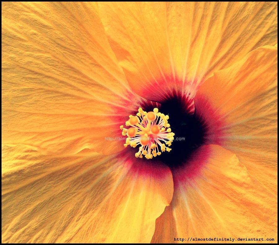Pretty Yellow Flower. by almostdefinitely