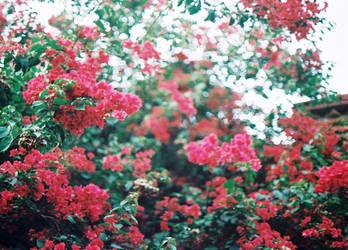 flower7 by LTKJJ