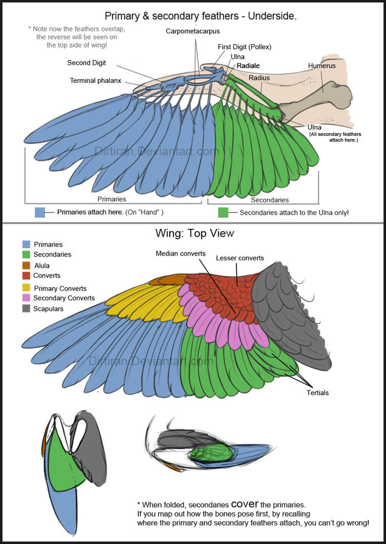 Bird Wings (Tutorial) by Key-Feathers on DeviantArt