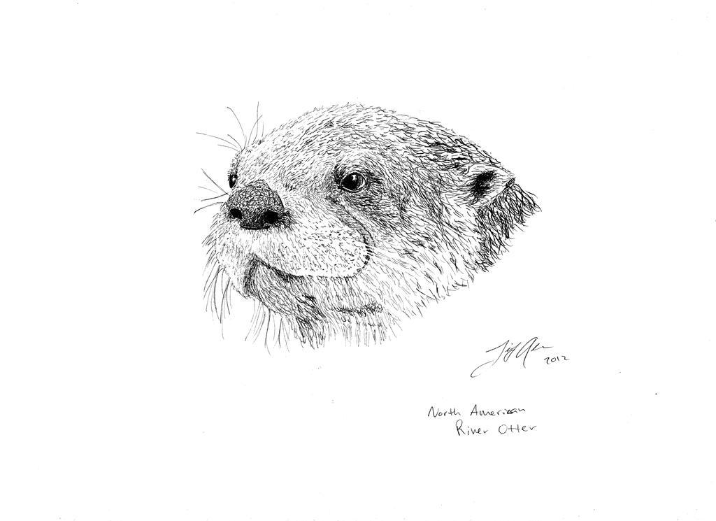 North American River Otter by ZvukTishiny on DeviantArt
