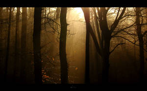 Winter Sun by Onodrim-Photography