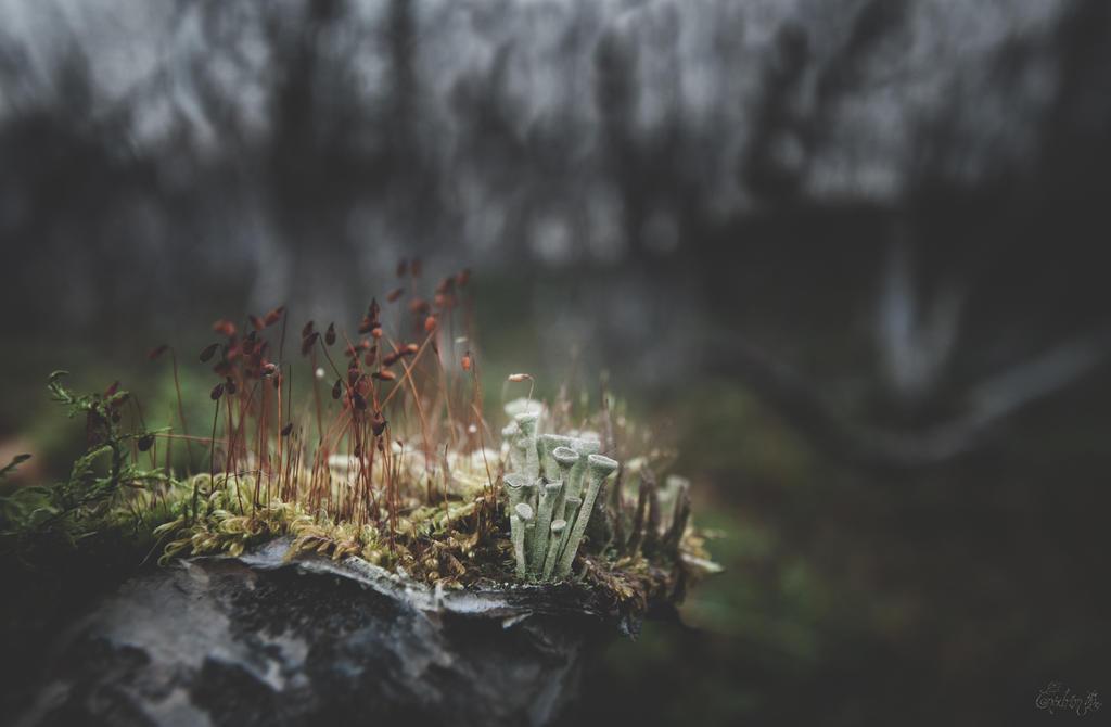 Les spores du Fukai by Onodrim-Photography