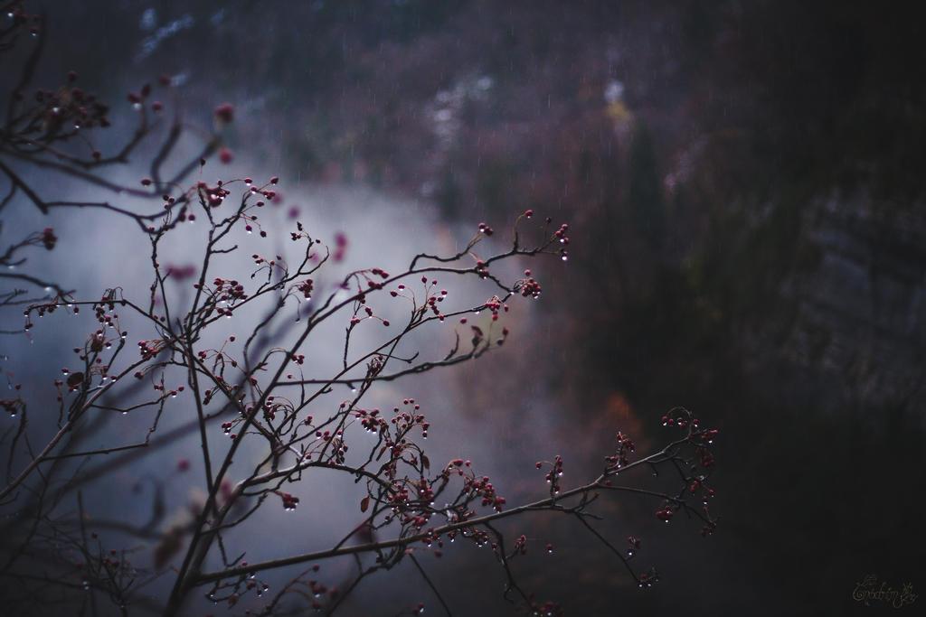 Tales of Annwvyn by Onodrim-Photography