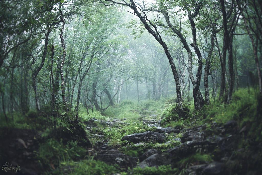 Sur les traces de Crom Cruach ... by Onodrim-Photography