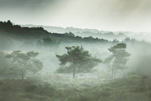 Sea of Trees by Onodrim-Photography