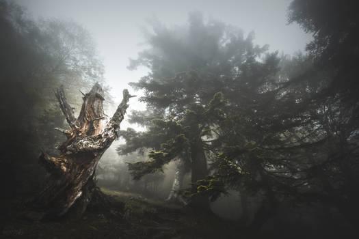 Guardian of Mist