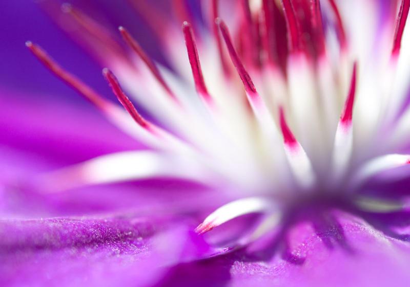 Purple Fireworks by TheWinterWren