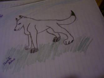 A wolf by shatara