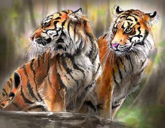 Sumatran tiger2 by Emushi