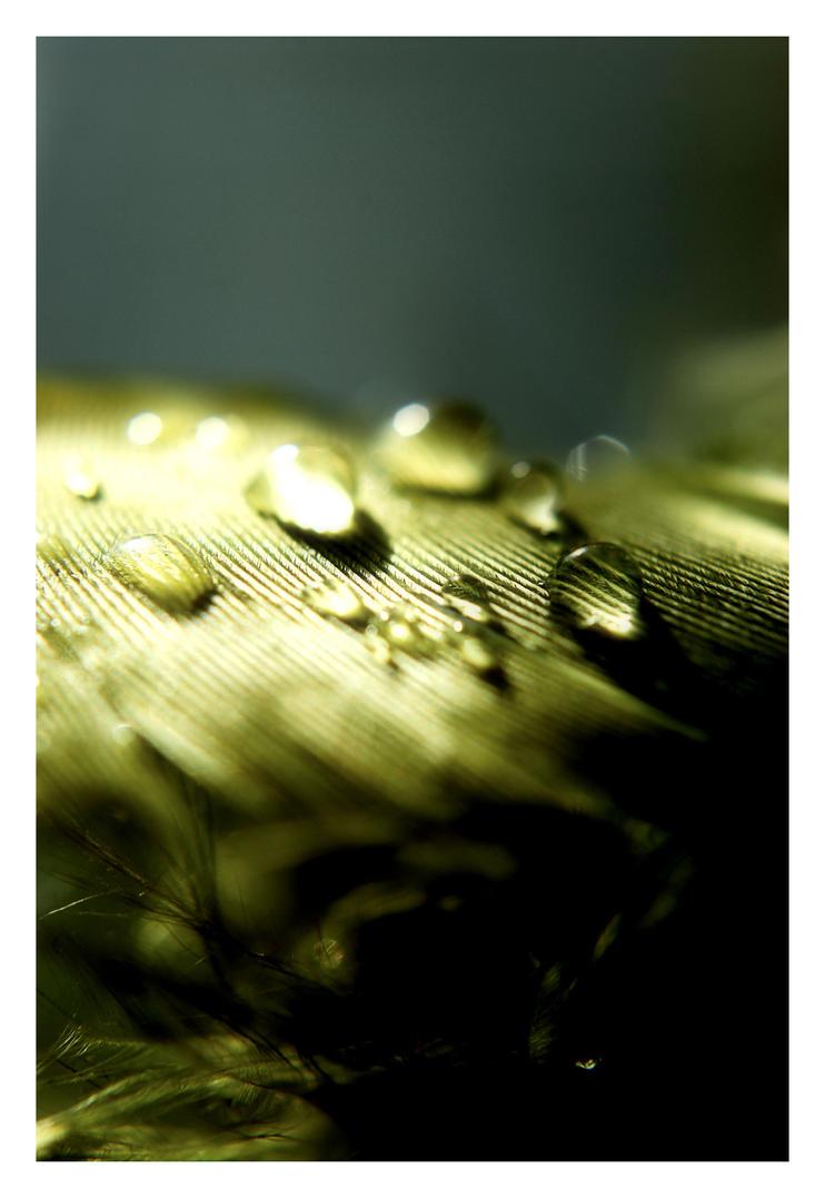 Green by angelbabiau