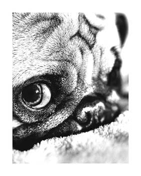 Love Is A Pug