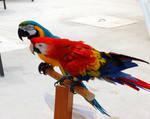 Both Parrots