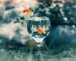 Fishy freeedom