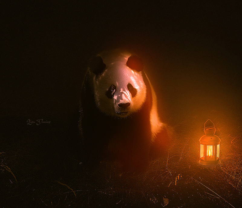 Panda pop by ziggy90lisa
