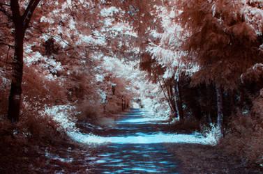 Infrared 720nm by JackHargreav