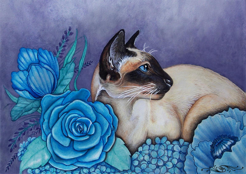 Chocolate Point Siamese Cat by EverIris
