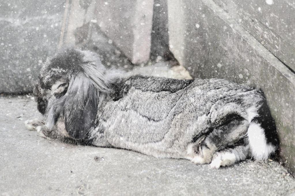 Leo asleep by pepsirat