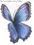 Buttterfly Wings