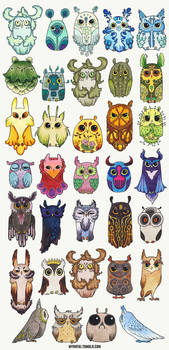 New owls