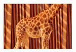 Giraffe Oh