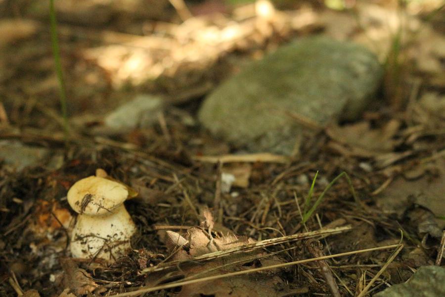 Little mushroom hiding in the woods by Little-Vampire