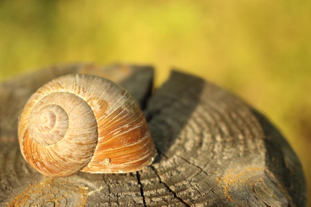Sleeping snail by Little-Vampire