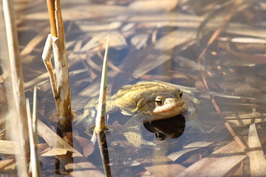 Froggie by Little-Vampire