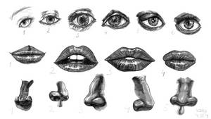 Study of anatomy 30