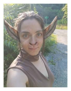 Guest: Donkey/Human