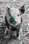 This little piggy stayed home... in 3D