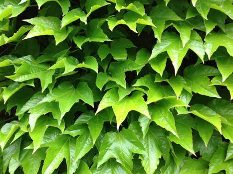 Leafy Wall
