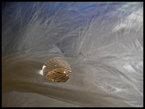Gold by 90percentAngel by FeatherClub