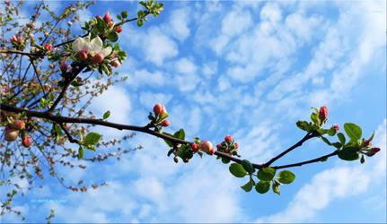 Spring Sky by vytra