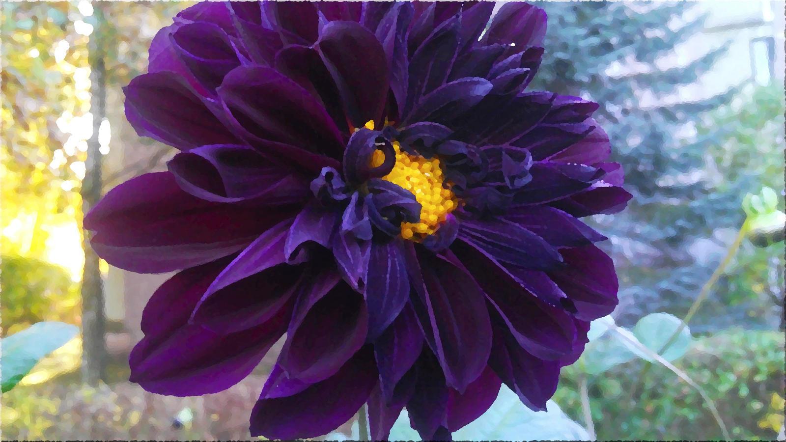 Big Flower Blossom