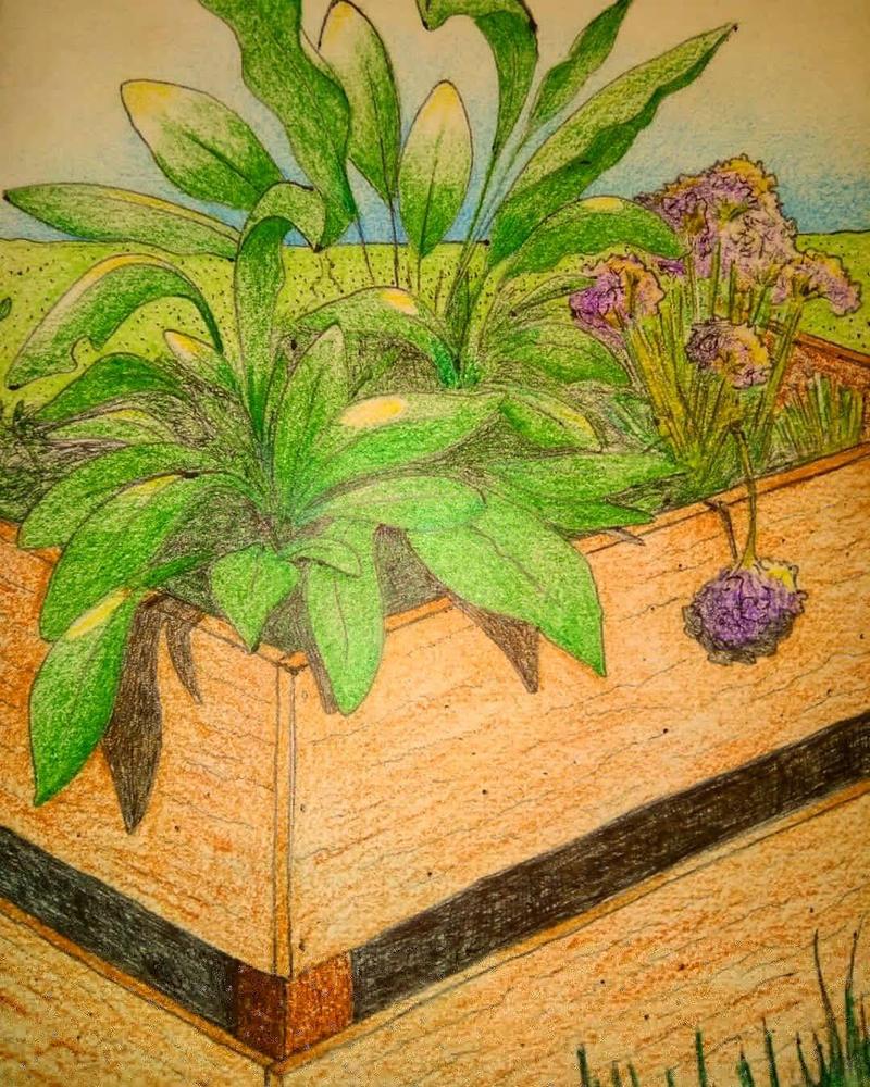Flower Box. by Noah-Kirkpatrick