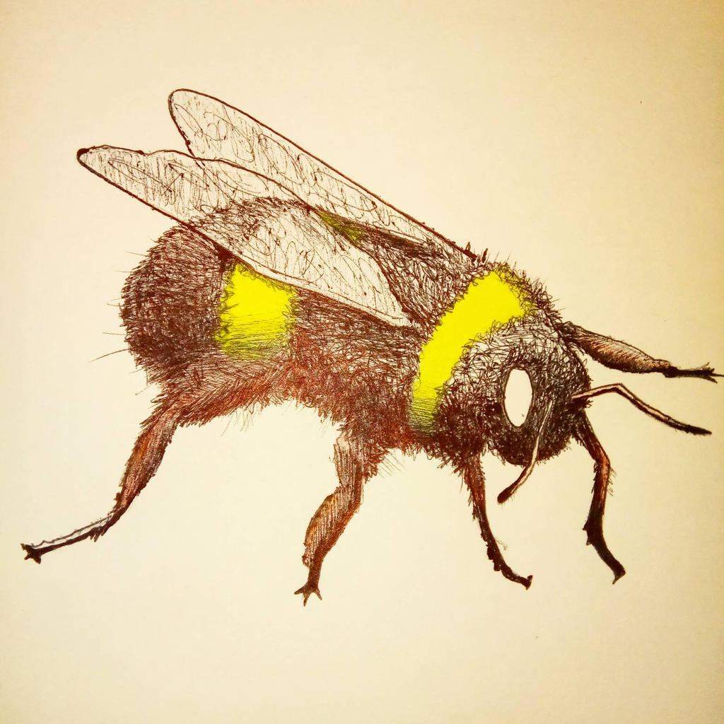 Fuzzy Bee. by Noah-Kirkpatrick