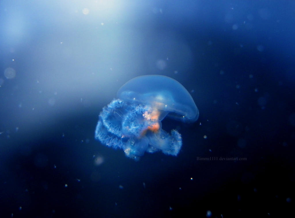 Tiny Jelly by Bimmi1111
