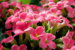 Hello, Spring! by Bimmi1111