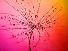 Warm Droplets by Bimmi1111