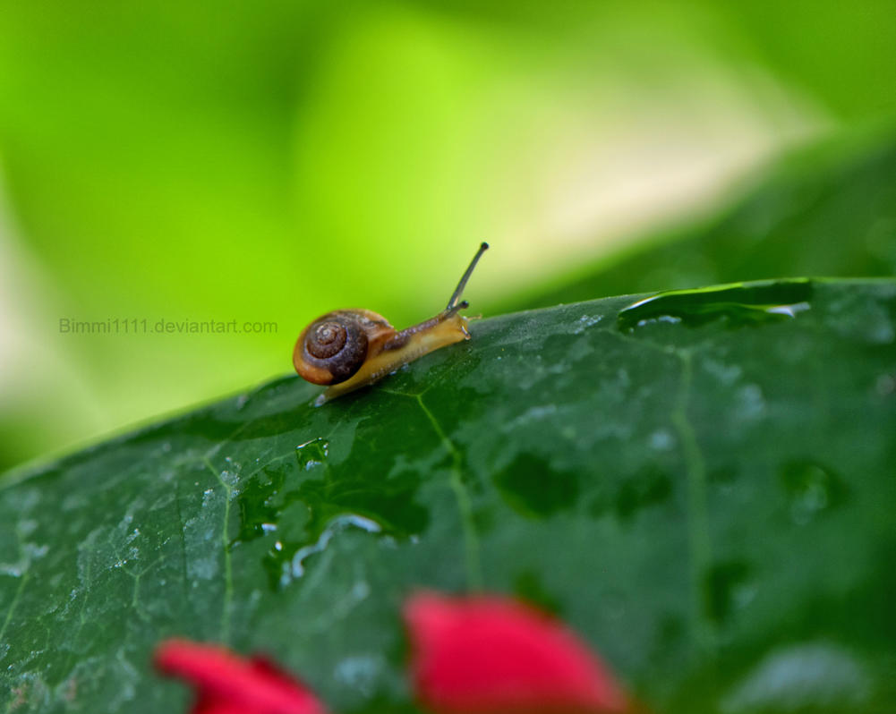 Little Snails Big Adventure by Bimmi1111