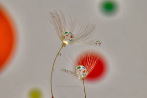 Polka-dot Drop by Bimmi1111