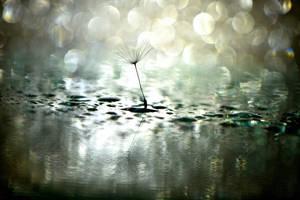 Shades of Silver by Bimmi1111