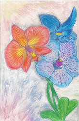Orchid Bouquet by MaryEvans