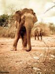 Elephant Hunt 01 by CrazyNalin