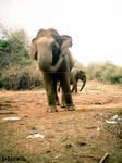 Elephant Hunt 02 by CrazyNalin