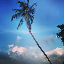 coconut tree by CrazyNalin