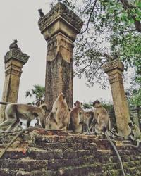 city of monkeys by CrazyNalin