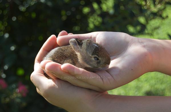 Baby Bunny by mizuiruka